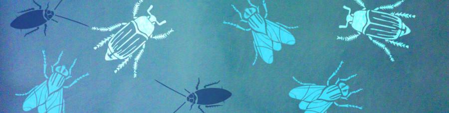 Souscat_insectes